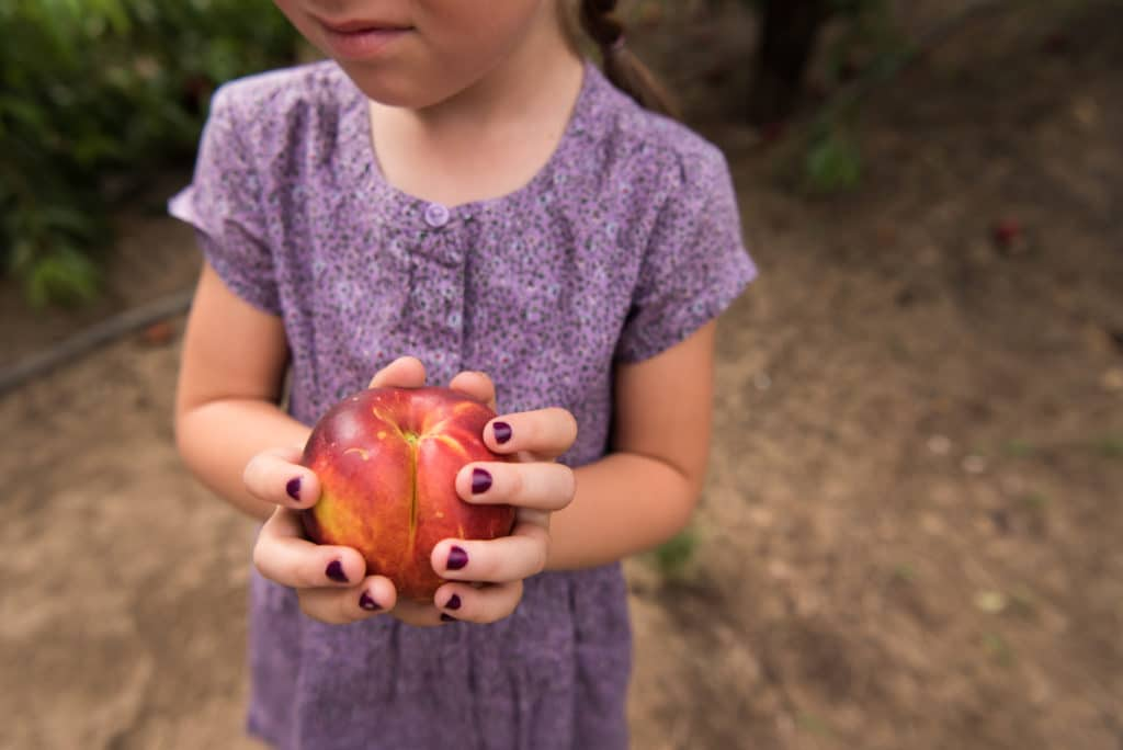 A young child holding a nectarine.