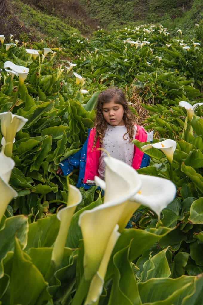 An image of a child exploring Calla Lily Valley in Big Sur.