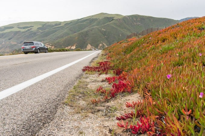 An image of a van parked along the western side of the Pacific Coast Highway with wildflowers on the side of the road.