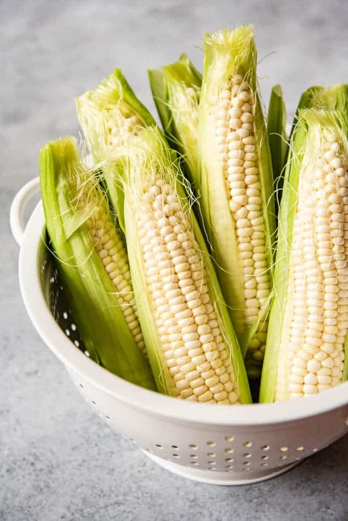 A white colander filled with ears of corn on the cob, reading for husking.