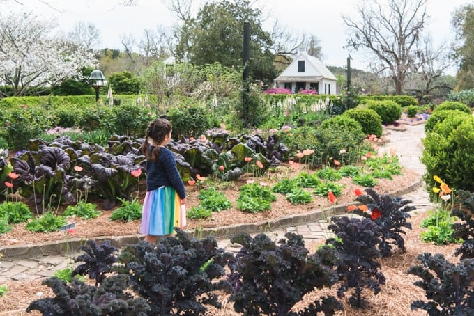 An image of the gardens at Boone Hall Plantation.