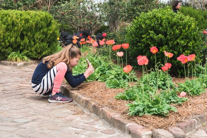An image of a girl taking a photo of flowers in the garden at Boone Hall Plantation.