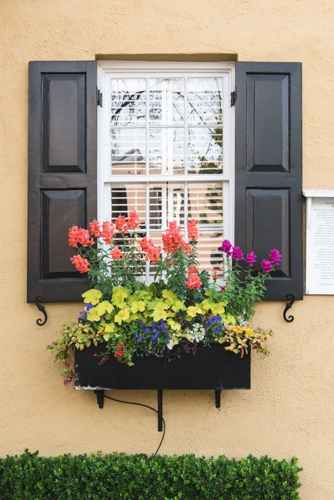 An image of a window box filled with flowers on Rainbow Row in Charleston, South Carolina.