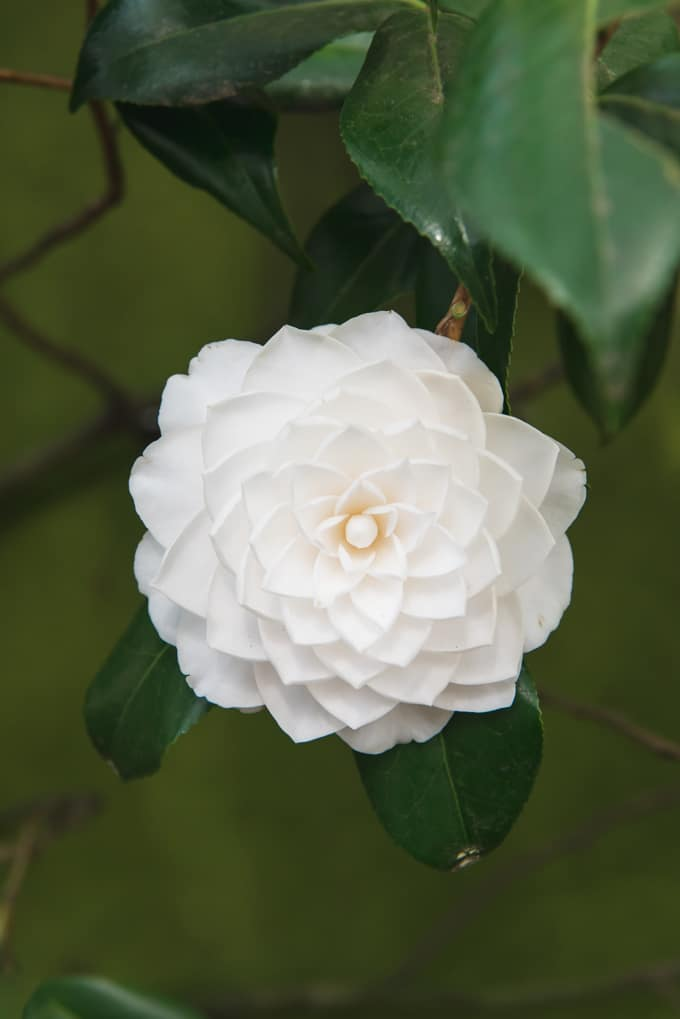 An image of a white flower.