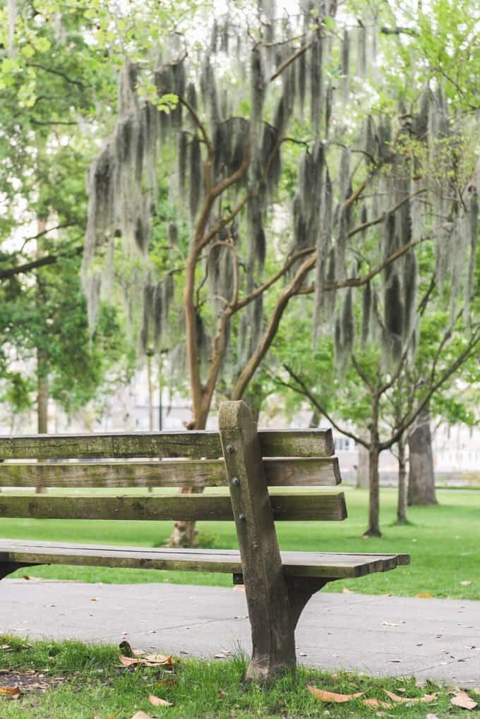 An image of a wooden park bench and Spanish moss.