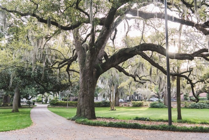 An image of a walkway leading through Forsythe Park in Savannah's historic district.