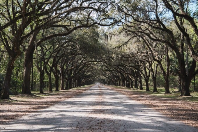 An image of the live oak avenue at Wormsloe.
