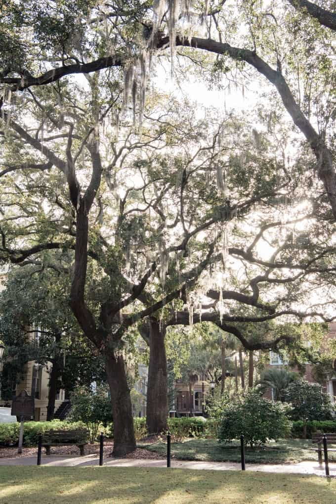 An image of trees in one of Savannah's historic squares.