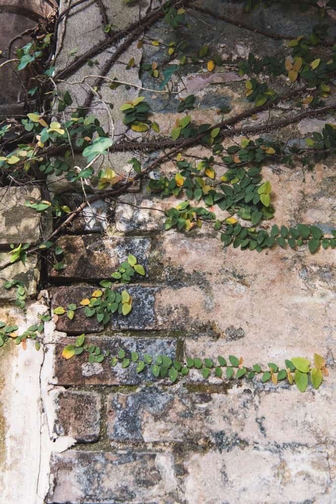 An image of vines growing over exposed brick and stucco.