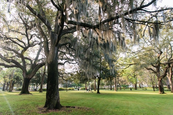 An image of trees and grass in Forsythe Park in Savannah, Georgia.