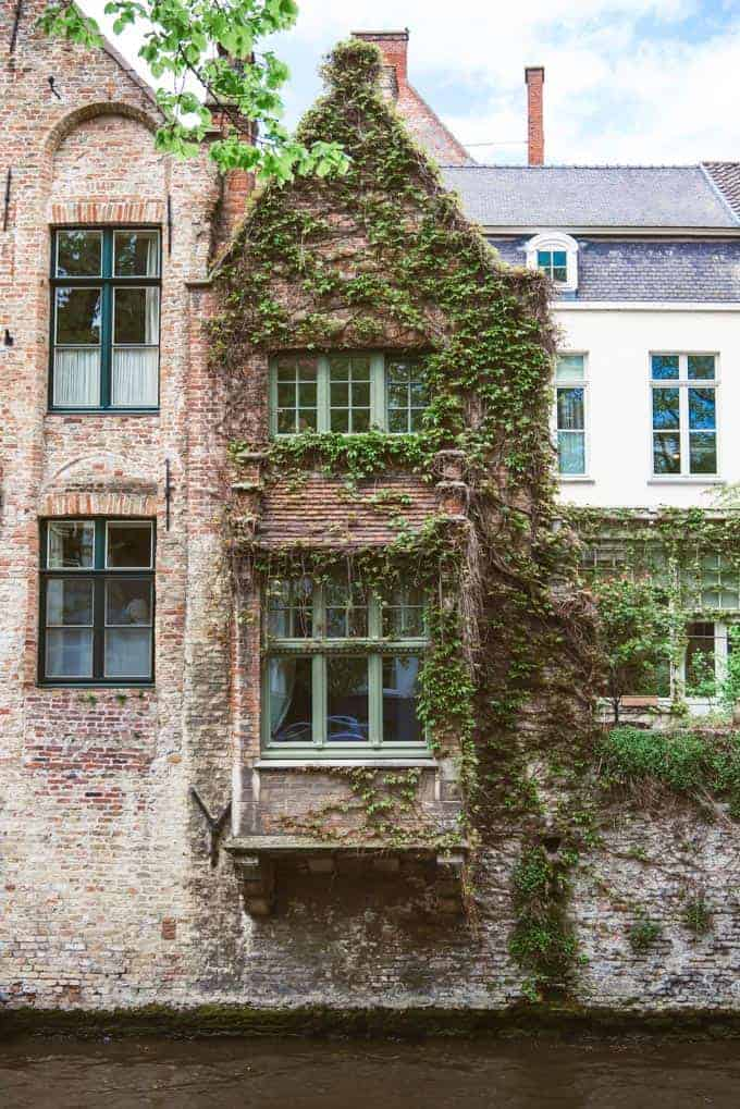 An image of windows surrounded by ivy in Bruges.
