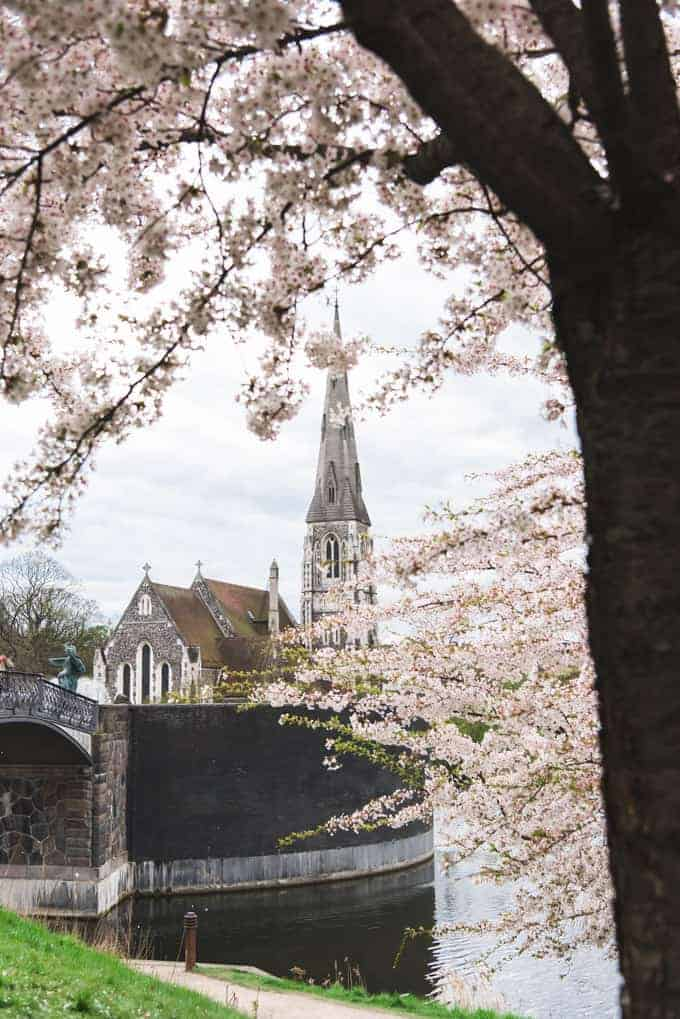 Blossoming trees in front of an old cathedral.