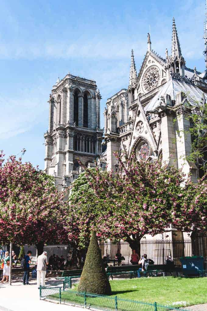 An image of blossoming trees in Paris in front of Notre Dame.