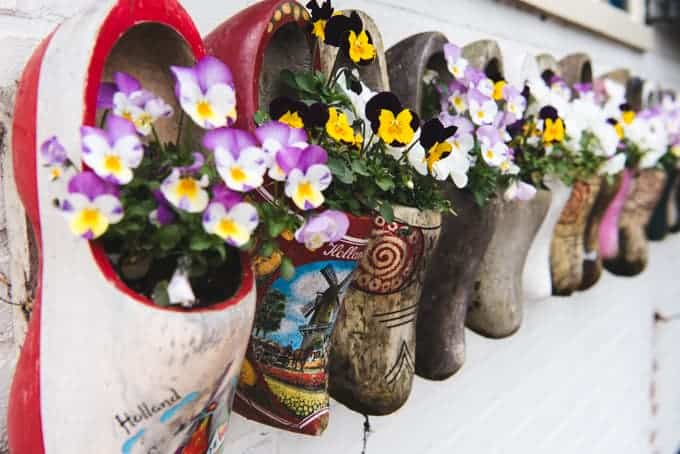 An image of wooden clogs in the Netherlands being used as a planter box for pansies.