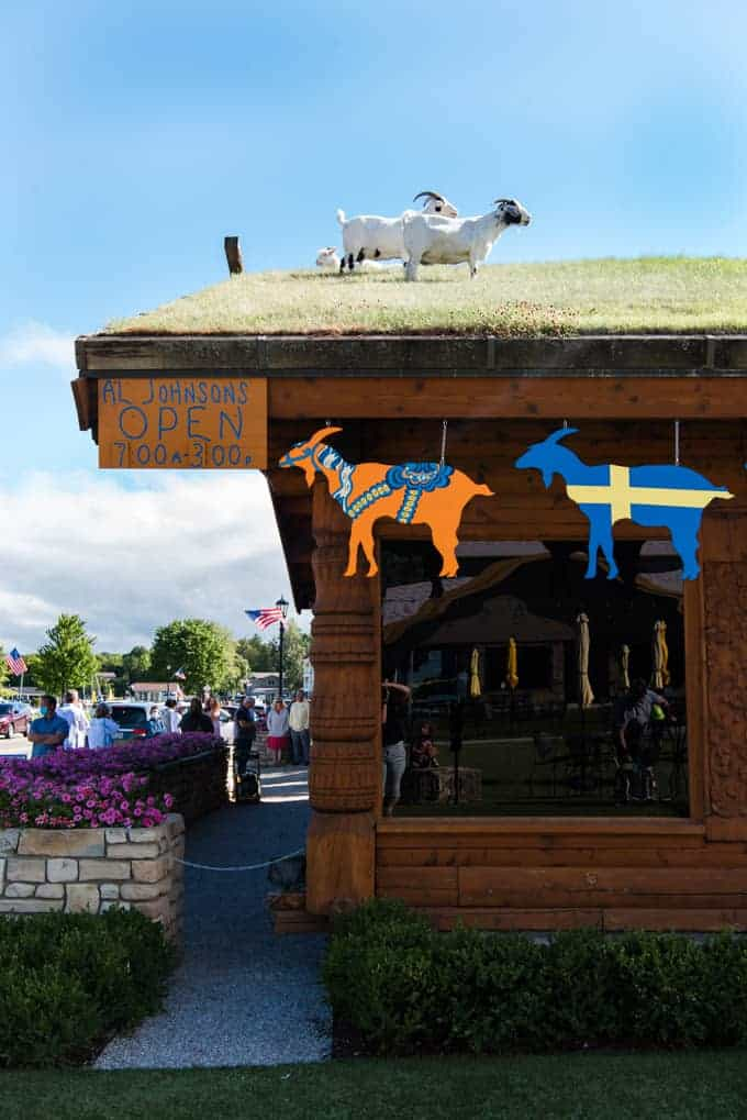 Goats grazing on the grass roof of Al Johnson's restaurant.