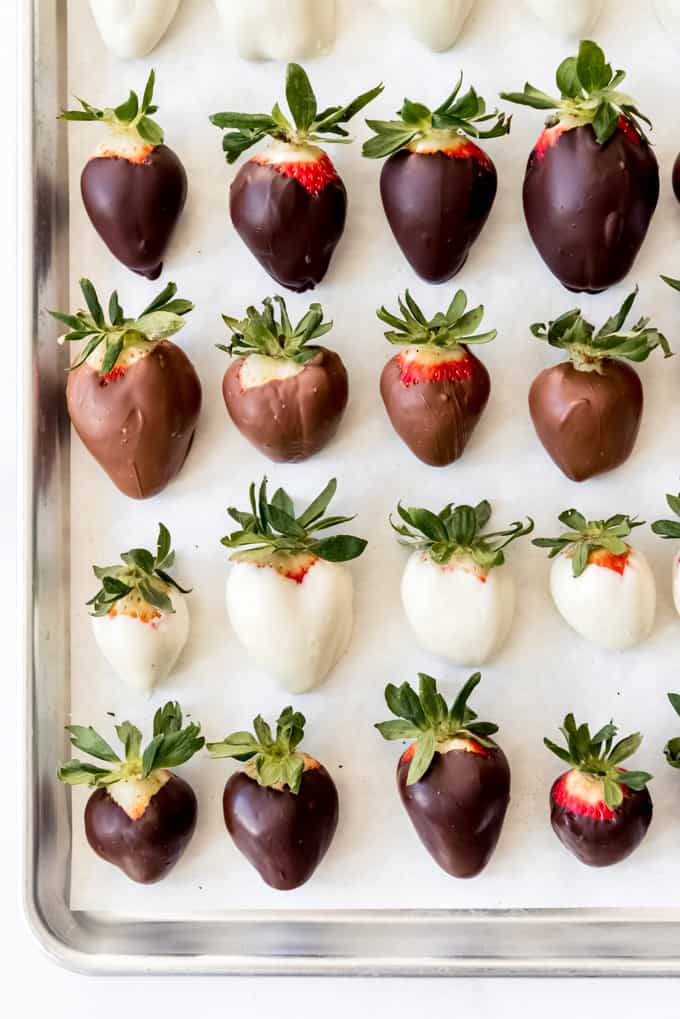 Chocolate covered strawberries arranged in rows on a baking sheet.