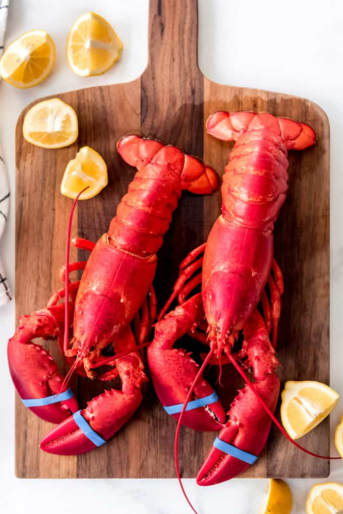 Two bright red cooked lobsters.