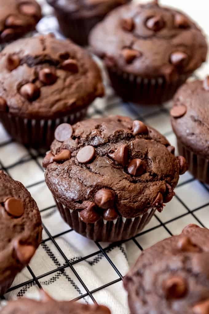 double chocolate muffin, close up